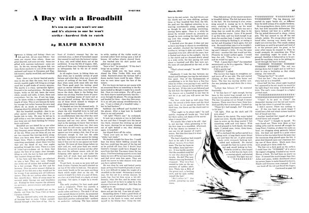 A Day with a Broadbill