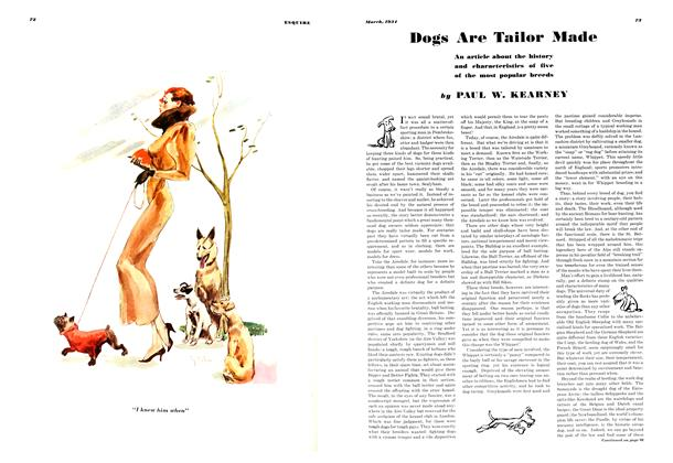 Dogs Are Tailor Made