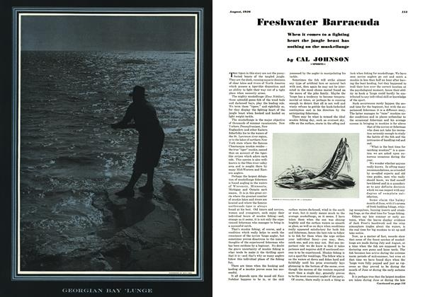 Freshwater Barracuda