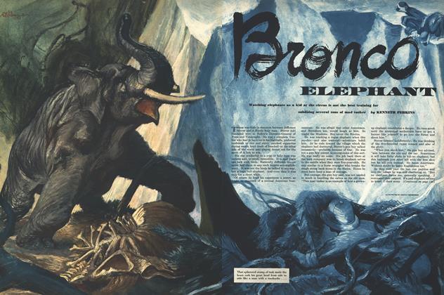 Bronco Elephant