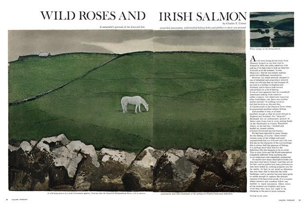 Wild Roses and Irish Salmon