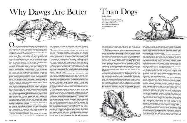 Why Dawgs Are Better Than Dogs