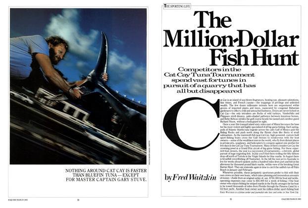 The Million-Dollar Fish Hunt