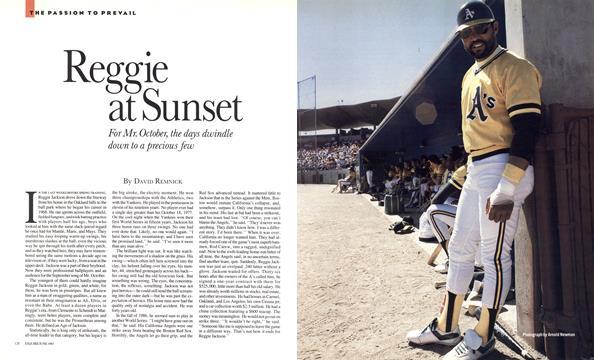 Reggie at Sunset